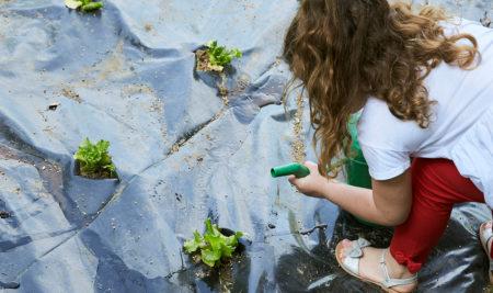 Progetto Micoltivo – curiamo l'orto nel giardino della scuola!